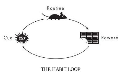 experimento hábitos con ratón